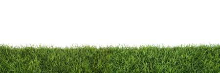 Grass isolated on white background. Imagens