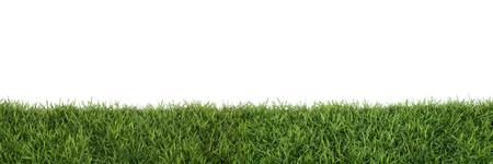 Grass isolated on white background. Reklamní fotografie