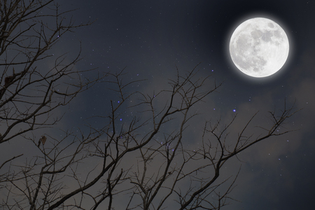 Dead branches with fullmoon and star.winter. Imagens