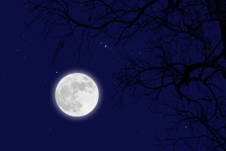 Fullmoon and star with dead branches .winter