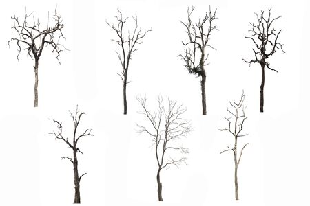 Satz toter Baum oder getrockneter Baum lokalisiert auf weißem Hintergrund. Beschneidungspfad. Standard-Bild