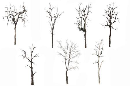 Set van dode boom of gedroogde boom geïsoleerd op een witte achtergrond. Uitknippad. Stockfoto