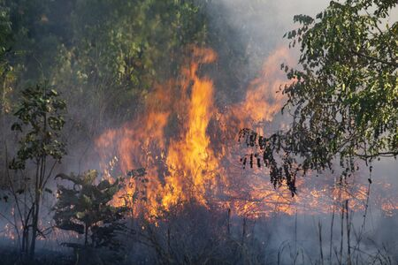 Ogień płonie trawę na poboczu drogi. Pożar.