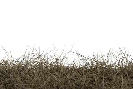 Dry grass isolated on white background.dry grass field