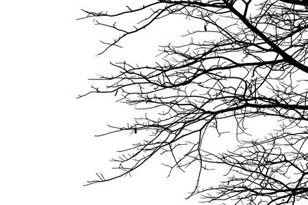 Dead branches, Silhouette dead tree or dry tree  on white background. Фото со стока