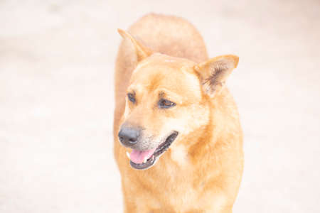A dog with blurred background.