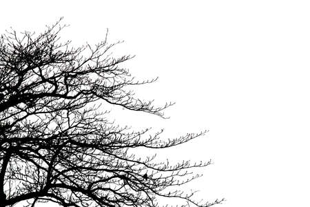 Dead branches isolate on white background.