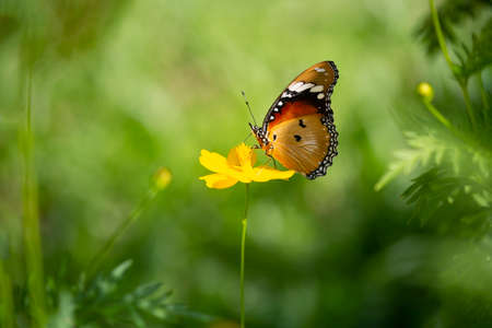 Butterfly and yellow flowers with blurred background. Фото со стока