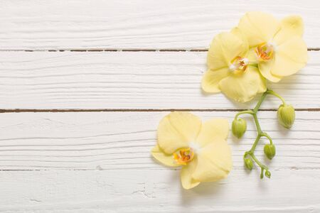 yellow orchids on white wooden background