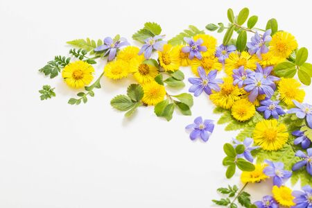 spring yellow and violet  flowers on paper background Stock Photo