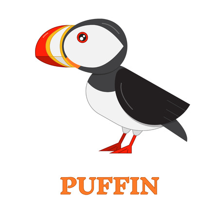 sea bird: Puffin sea bird line art icon. Birdwatching popular bird collection. Flat design nothern puffin colored in bright vivid colors. Simple and cute style.