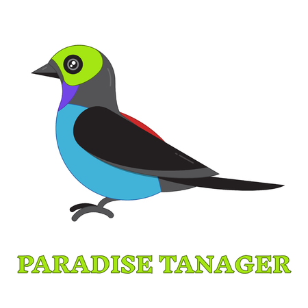 birdwatching: Paradise tanager line art icon. Birdwatching popular bird collection. Flat style design exotic tanagra. Geometric simple shape linear pictogram
