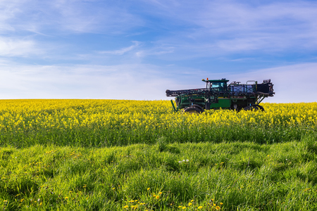 threw: Flowering rape field, canola crops and tractor on sunny day. Agricultural engine riding under blue sky threw colza plants.