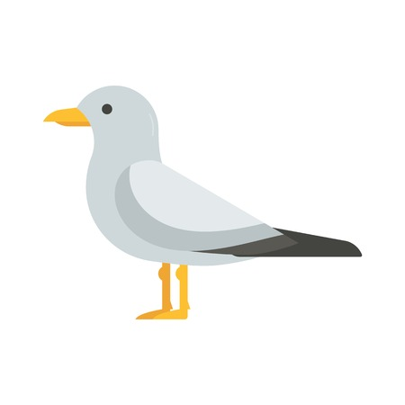 seabird: Colorful seagull bird vector illustration. Sea gull icon in flat design. Seabird isolated on white background.