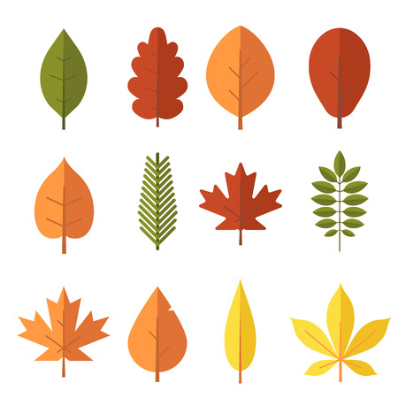 Autumn leaf flat design set. Green, red and orange fallen autumn leaves collection. Maple, spruce, oak, rowan, birch and more leaves isolated on white background.