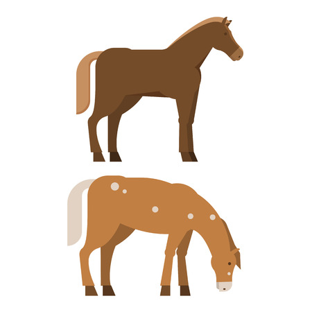 Bay horse standing isolated on white background. Chestnut stallion bowing his head vector illustration.