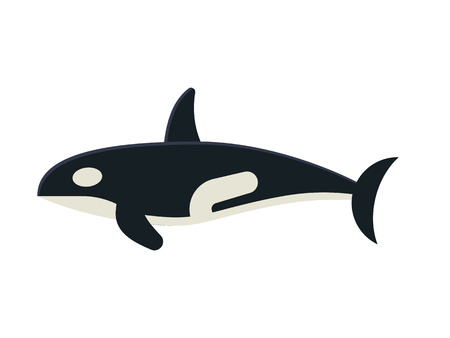Cartoon killer whale isolated on white background. Orca vector illustration in flat design.