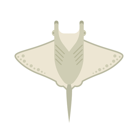 water chute: Cartoon stingray isolated on white background. Manta ray vector illustration in cartoon style. Devilfish top view in flat design.