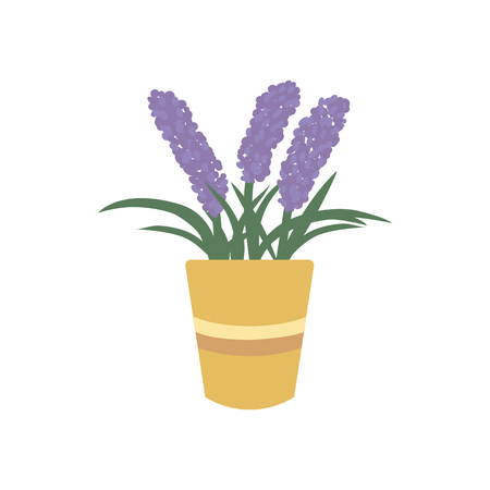 Lavender in flower pot icon. Blooming fragrant violet flowers or herb in pot. Provence floral vector illustration isolated on white.