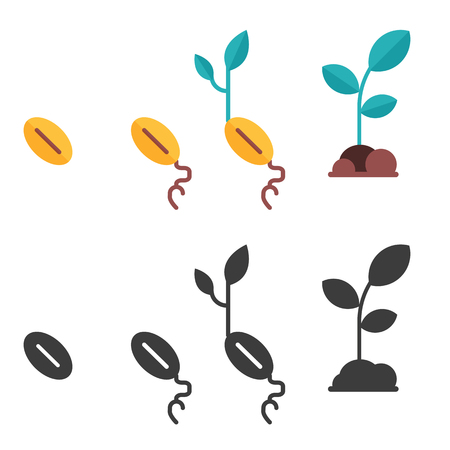 Plant growth stages from seed to sprout. Colored and monochrome icons of organic plants growing process and planting phases. Green spring flower grow cultivating steps in flat style. 写真素材
