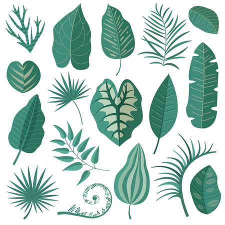 Collection of green tropical leaves, palm tree branches, banana leaf and exotic rainforest leaves in cartoon style. Botanical set with summer Hawaiian paradise plant elements, jungle floral foliage.  イラスト・ベクター素材