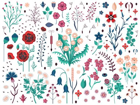 Wild flowers with seeds, buds, petals and leaves set. Hand-drawn meadow herbs and wildflowers with dandelion, poppy, clover, cornflowers, bluebell and carnations. Field plants with blossom. Ilustrace