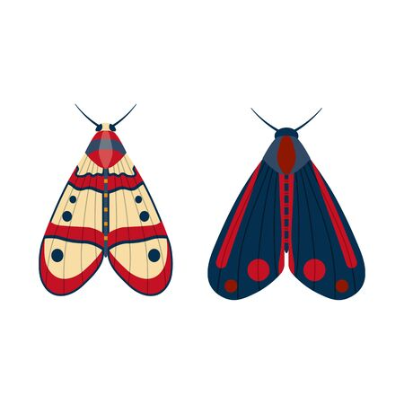 Colorful Tropical Butterfly Moth Icons in Cartoon
