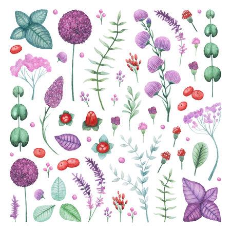 Watercolor Garden Flowers and Herbs Elements Set