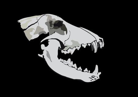 unexpectedness: Antiguo cr�neo de un depredador-perro o el lobo sobre fondo negro