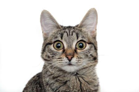 Young Curious Cat Banque d'images - 4291827