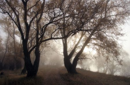 Silent morning in a foggy autumn wood photo
