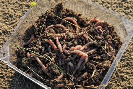 Container with earthworms