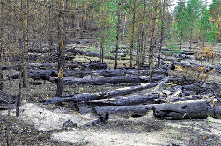 sprawled: Siberia.The consequences of a fire in the forest