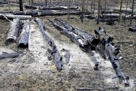 Siberia.The consequences of a fire in the forest   Stock Photo