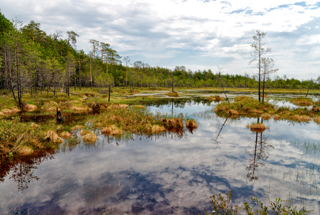 swampy: Summer. Impenetrable swamp in the Siberian taiga