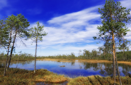 Impassable summer swamp in the Siberian taiga