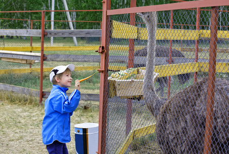 7 year old boy admires the large African ostriches in the cage. Carefully holds out his treat-carrots