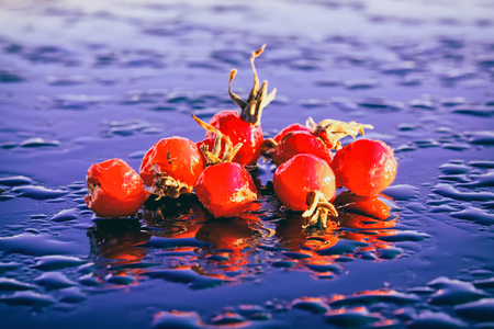 Still life with several bright wild rose hips lying on a wet reflective surface