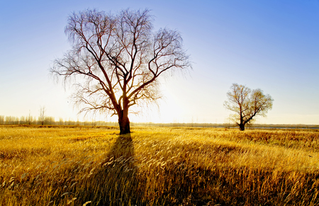 Autumn landscape - old willows in a field on the river Bank lit by the setting sun Foto de archivo