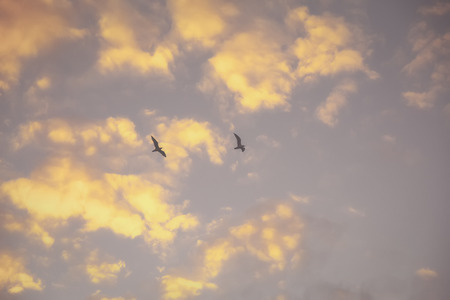 Two seagulls in the fog flying against the autumn evening sky Foto de archivo