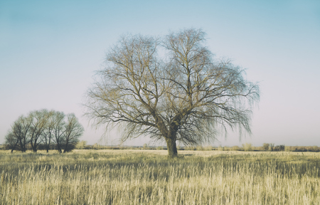 A huge willow on a large autumn field of grass, as a background