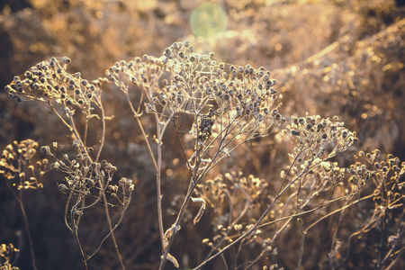 Dried autumn grass as background, screen saver Foto de archivo