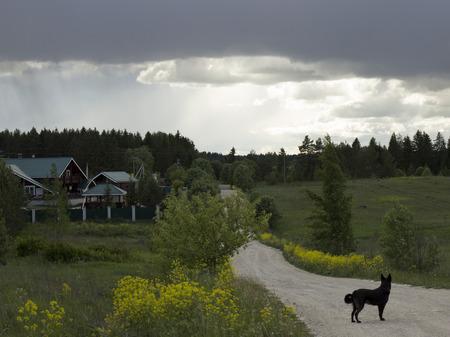 perro asustado: Las nubes sobre la casa y el camino hacia el perro asustado