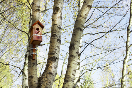 dwell: Red birdhouse hangs on a birch tree