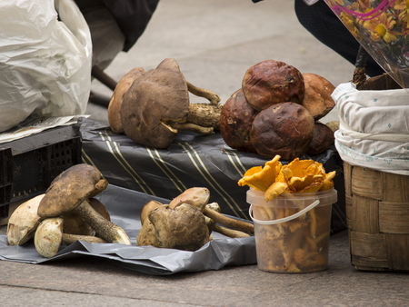 The street market sells white mushrooms, chanterelles and flowers Stockfoto