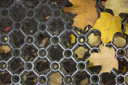 Patterned metal grill and wet yellow maple leaves. Place for inscription.