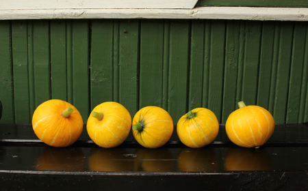 Small pumpkins in a row on a bench near a wooden wall
