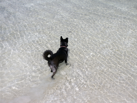 Black dog stands in the water of the lake and looks into the distance waiting