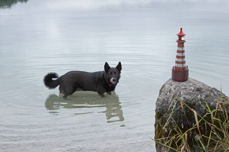 Funny black dog ruined the shooting of a toy lighthouse Stock fotó