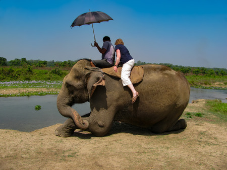 Elephant riding Stock Photo
